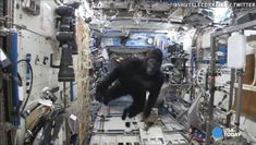 'Gorilla' chases astronauts aboard space station | Astronauts Scott Kelly and Tim Peake