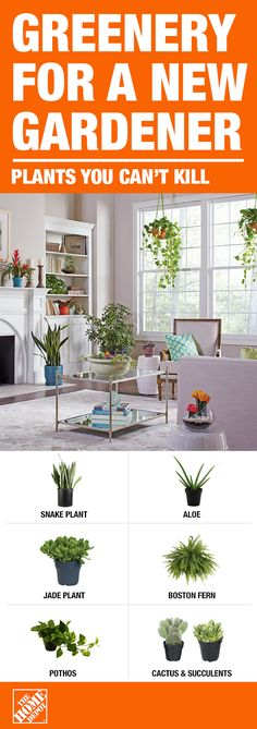 Bring the outside inside and add indoor houseplants throughout your home. These 6 indoor houseplants are easy to maintain and a starting point for new-to-gardening gardeners. They not only add dimension and style to your space, but also clean the air arou Container Plants, Container Gardening, Indoor Gardening, Fine Gardening, Balcony Gardening, Gardening Gloves, Gardening Tips, Succulents Garden, Planting Flowers