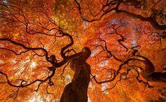 Осень, Danny Dungo. Ловите мгновения на Яндекс.Картинках.
