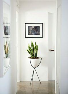 Houseplant display Ideas more (9)