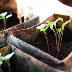 13 Shocking Shortcuts to Starting Seeds Indoors