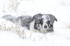 Brooks, Alberta   No matter the weather, my dog keeps going enjoying every minute.