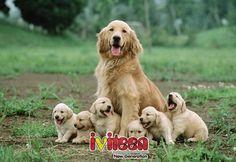 """Ngây ngất với hình ảnh chó mẹ và đàn con """"cưng muốn chết"""" - http://www.iviteen.com/ngay-ngat-voi-hinh-anh-cho-me-va-dan-con-cung-muon-chet/ Những bức hình sau sẽ khiến bạn muốn ngay lập tức ôm cả đàn cún về nhà để nuôi và cưng nựng.      google_ad_client = """"ca-pub-6485864998951507"""";     google_ad_slot = """"9729099072"""";     google_ad_width = 320;     google_ad_height = 100;"""