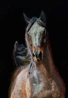 """Horse by Wojtek Kwiatkowski (Ronceval) """"Naturszczyk"""""""