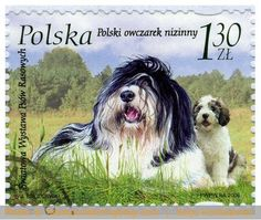 Poland 2006 - Polish lowland sheepdog...keeping a tradition alive