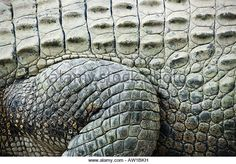 92 best the crocodile peter pan images on pinterest fabric crocodile skin close up altavistaventures Images