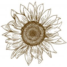 Drawing Tips sunflower drawing Sunflower Sketches, Sunflower Illustration, Sunflower Drawing, Sunflower Art, Sunflower Tattoos, Sunflower Stencil, Sunflower Images, Sunflower Design, Sunflower Mandala Tattoo