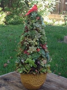 Christmas Tree, Succulents, cardinal.