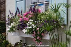 These Charleston window boxes use beautiful shade and sun plants to add great curb appeal to the front yard garden. Get inspiration from their window box ideas to design gorgeous flower box plant combinations for your own home. #fromhousetohome #charleston #garden #containers #flowers #curbappeal