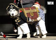 Dog Pirate Costume!