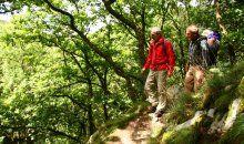Wanderwege am und um den Rursee in der Eifel