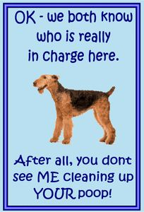 """Got an Airedale Terrier?  Then you're familiar with """"attitude"""""""