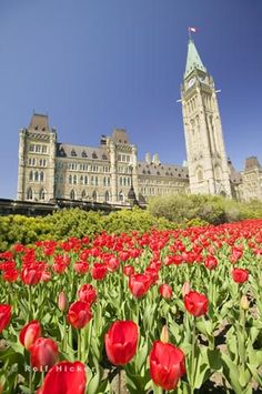 And on the seventh day God created Ottawa and thought, 'i have left them with the perfect example of civilized society. Let's see how many of them can get it right.'