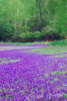 Tumblr Flower Meadows | field of flowers Flowers Garden Love | Flower ing Fields and Meadows