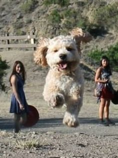 I know what you're thinking, and no, it's not a giant dog, it's a dog on a hill and two girls on the road behind him.