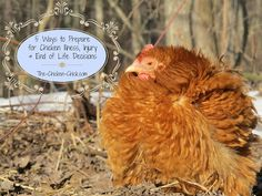 The Chicken Chick®: 5 Ways to Prepare for Chicken Illness, Injury & End of Life Decisions