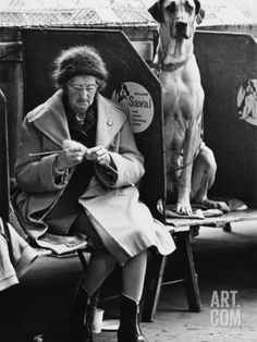 Knitting and the Great Dane - Manchester Dog Show 1966 Photographic Print by Shirley Baker at Art.com