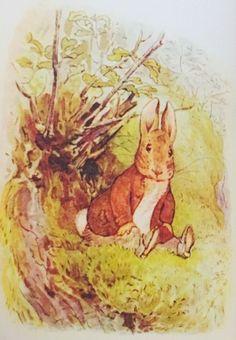 Vintage Peter Rabbit book illustration / Beatrix Potter color illustrations