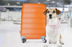 10 of the most dog-friendly airports in the U.S