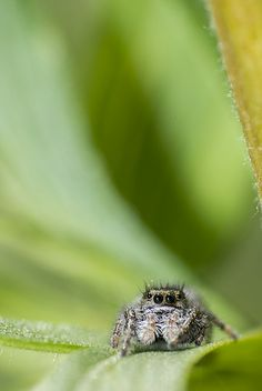 Rediculously Photogenic Spider