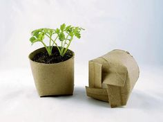 Don't toss those old toilet paper rolls. Use them to start seeds!