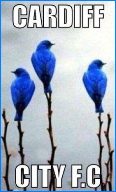 CARDIFF CITY FC  BLUEBIRDS .. CCFC