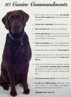 """Oh boy.....#9 and 10 are so true.  I believe in them wholeheartedly.  """"If you take a living thing in to your home, you are responsible for it for its whole life."""". Those words were from my paternal grandmother, who with great wisdom passed them to my father (rest his soul) who then passed them to me.  Thank you Bubbe and Daddy!  I love my doggies soooo much. xo"""