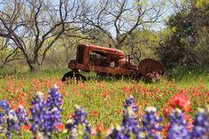 Texas Farm Bureau (@TexasFarmBureau) | Twitter