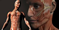 Poster - Muscle Layout of the Human Face and Body (Picture Print Art Anatomy) A4 Poster, Body Picture, Print Pictures, Face And Body, Human Body, Trauma, Muscle, Statue, Art Prints