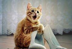 Embe?! ... Solo gli stivali dovremmo mettere?!
