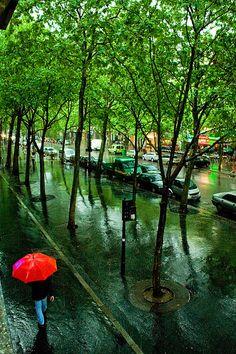 Summer Rain, Paris, France