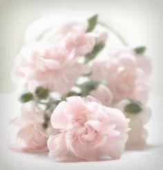Tumbling Pink