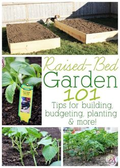 build a raised bed on the cheap- however, you shouldn't use treated wood.... but if you can't find untreated wood- line with weed barrier fabric