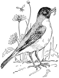 Robin In Flower Garden Coloring Page From Robins Category Select 20890 Printable Crafts Of Cartoons Nature Animals Bible And Many More