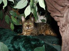 Pretty Eyes!!!! Ultimate Cat Tree