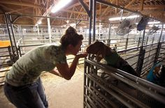 Laney Sheppard, 18, of Beulah talks to her goat, Cash, following the Pueblo County Fair goat show at the Colorado State Fairgrounds. (Chieftain photo by John Jaques, July 13, 2012)