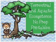 Aquatic ecosystems worksheet