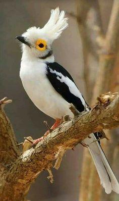 Most Beautiful Birds, Pretty Birds, Love Birds, Small Birds, Colorful Birds, Little Birds, Beautiful Creatures, Animals Beautiful, Animals And Pets