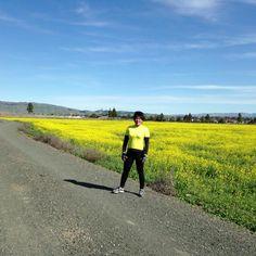 Mustard fields, Fremont, CA