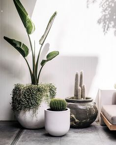 The Balcony Garden is a leading supplier of designer garden pots and planters available for sale online. Indoor Garden, Garden Pots, Indoor Plants, Outdoor Gardens, Indoor Outdoor, Outdoor Balcony, Rustic Planters, Outdoor Pots And Planters, Balcony Plants