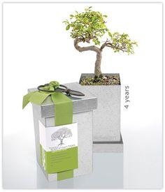 Leaves change with the season Bonsai Plants, Bonsai Garden, Ceramic Planters, Planter Pots, Kits For Kids, Farm Gardens, Garden Gifts, Garden Accessories, Mother Day Gifts