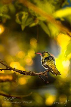 http://ift.tt/2jr6Zkd #Nature_breathtaking #Photos Little by eliasvidart