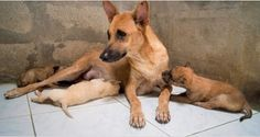 Molly was blind and homeless when she gave birth to 11 puppies.  Somehow, she kept them all alive.  http://us8.campaign-archive1.com/?u=602549a912c4969971dde5370&id=357be49380&e=%5BUNIQID
