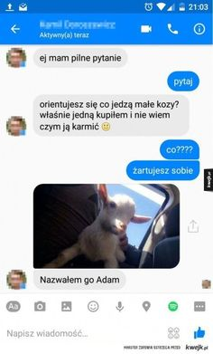 Funny Sms, Funny Messages, Wtf Funny, Polish Memes, Wattpad Quotes, Fresh Memes, Reaction Pictures, Funny Comics, Cool Pictures