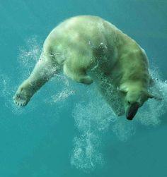 UWphotography, Polar Bear by Tilly Meijar