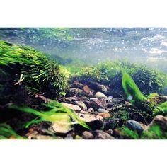 Top Fin® Underwater Tropical River Reversible Aquarium Background at PetSmart. Shop all fish backgrounds online Tropical Aquarium, Saltwater Aquarium, Freshwater Aquarium, Aquarium Fish, Wild Bird Food, Wild Birds, Fisher, Fish Background, Background Images