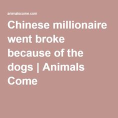 Chinese millionaire went broke because of the dogs | Animals Come