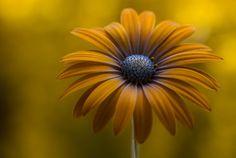 daisy wallpaper pack 1080p hd (Berenice Young 2048x1378)