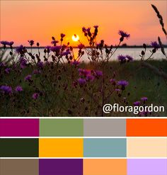 #summer colour swatches