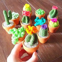 Tiny cactus with stones